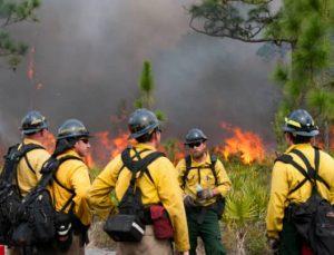 Team Of Wildland Firefighters